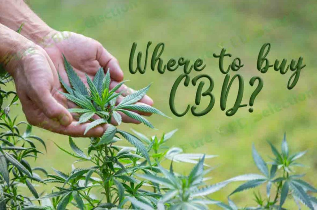 Where to buy CBD